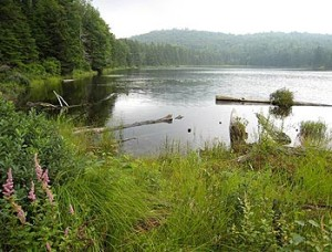 Cow Mountain Pond, Granby Donated in 1998 First Forest Legacy Project in the Nation - passumpsic Valley Land Trust