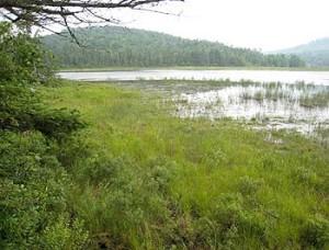 Mud Pond